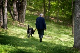 United Methodist Bishop Rueben P. Job walks his dog, Dakota, at his home near Nashville, Tenn. Photo by Mike DuBose, UMNS
