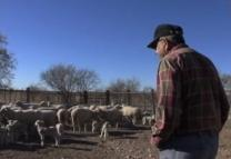 Texas rancher Glen Fisher talks about how he relates to the shepherds at the Nativity.