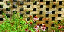 Flowers bloom near a brick wall. Photo by Kathryn Price.