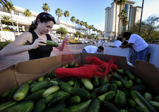 Delegates and visitors at the 2012 United Methodist General Conference in Tampa, Fla., sort and repackage cucumbers that have been gleaned and will be distributed to local food ministries by the Society of St. Andrew. The produce drop took place on May 1. A UMNS photo by Paul Jeffrey