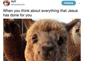 Screen grab from Twitter feed for HJY shows llama.