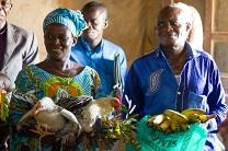 A chicken and bananas were gifts to visitors at a church in Kindu, Maniema Province, Democratic Republic of the Congo. Photo by Matt Crum, United Methodist Communications.