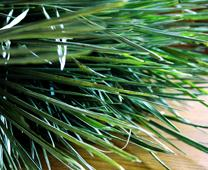 Palm branches used on Palm Sunday services are often saved by churches to be burned and used for Ash Wednesday the following year. Photo by Kathryn Price, United Methodist Communications.