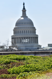 Green roof on GBCS looks at US Capitol. Photo from GBCS.