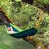 Silk Traveller Forest
