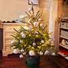 Pot Grown Nordmann Christmas Tree