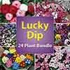 Lucky Dip Autumn Bedding Plants