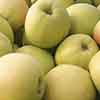 Apple Golden Delicious Tree