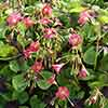 Plant o Mat - Chives and Wood Sorrel