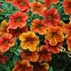 Secrets of Seville Garden Ready Collection