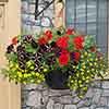 Beauties of Belgium Garden Ready Collection