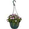 Pair Viola/Pansy 11in (28cm) Green Hanging Baskets