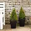 Box Pyramid 26cm