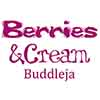 Buddleia Berries and Cream