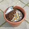 Plant o Mat Tulip and Crocus Planting Kit