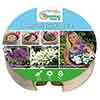 Plant o Mat Allium Planting Kit
