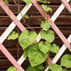 Expanding Wooden Trellis Garden Plant Support 6ft x 2ft