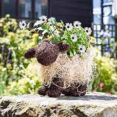 Shelly Sheep Planter