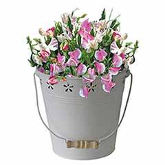 Sweet Pea Gift Bucket