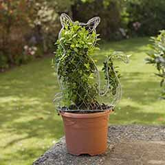 Grow Your Own Living Cat Box Topiary Plant