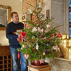 Living Pot-Grown Norway Spruce Christmas Tree