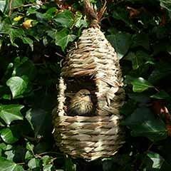 Tall Willow Nest Pocket