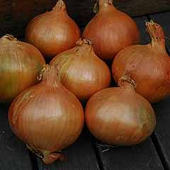 Onion Sets Stuttgart Giant