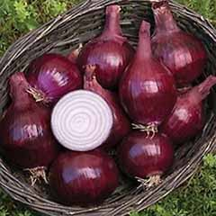 Onion set Red Baron