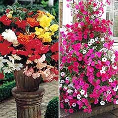 96 Complete Best Sellers Basket Plug Plant Mix