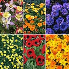 Mixed Wild Flowers Plants