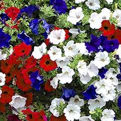 Pair Of Pre-Planted Patriotic Mix Hanging Baskets
