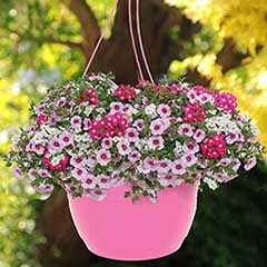 'Lipgloss Mix' Pre-Planted Basket