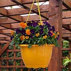 Viola 'Totally Brilliant' Hanging Basket