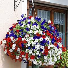 'Union Jack' Pre-Planted Basket