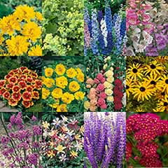 Complete Hardy Garden Perennial Collection x 24 plugs