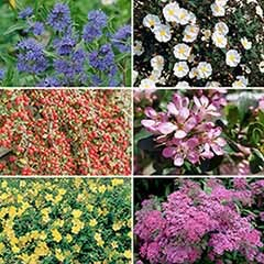 Flowering Shrub Collection