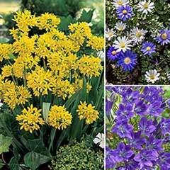 150 Summer Flowering Bulbs