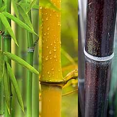 Bamboo Collection - Yellow, Green & Black 2L