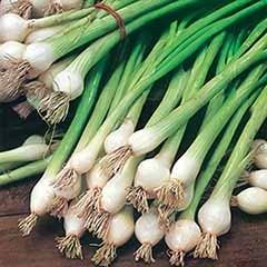Onion 'White Lisbon' Seeds