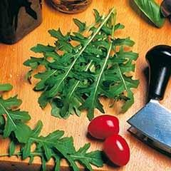 Salad Rocket Seeds