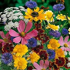 Mixed Wildlife Attracting Annuals Seed Mix