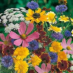 Mixed Wildlife Attracting Annuals pkt of seed