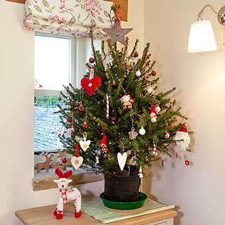 Pot-grown Living Christmas Tree