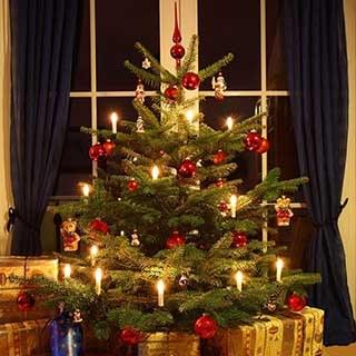 Nordmann Fir Cut Christmas tree 1.2-1.4m