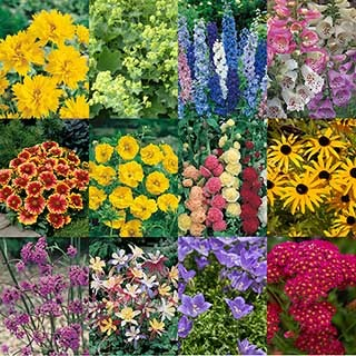 Cottage Garden Perennials