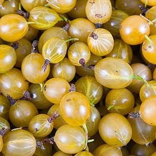 Gooseberry 'Hinnomaki Yellow'