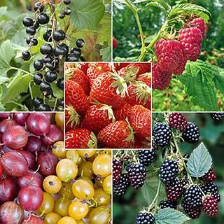 The Complete Fruit Bush Garden