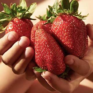 Strawberry 'Sweet Colossus'