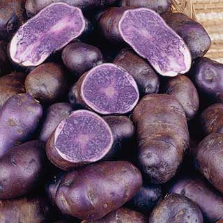 Premium Seed Potato 'Albert Bartlett Purple Majesty' - maincrop