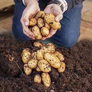 Complete Patio Potato Growing Kit